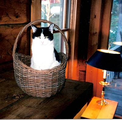 Cat In A Basket Art Print by Sharon Blanchard