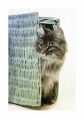 Digital Art - Cat In A Basket by Susan Stone