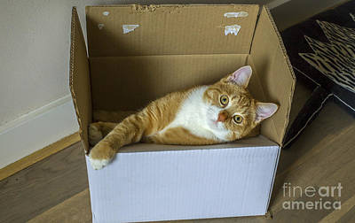 Photograph - Cat In A Box by Patricia Hofmeester