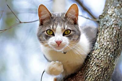 Cat In A Tree Art Print by Susan Leggett