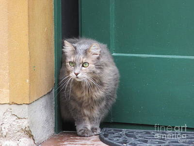 Photograph - Cat In Augsburg by Chani Demuijlder
