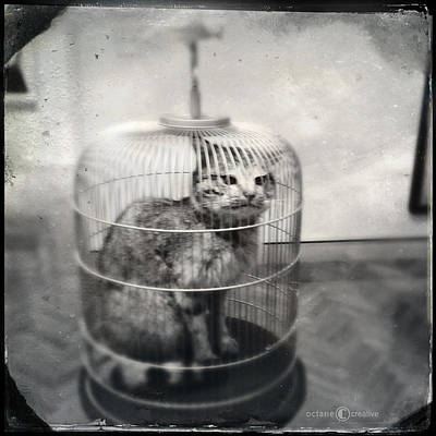 Photograph - Cat In Cage by Tim Nyberg
