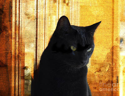 Photograph - Cat In Contemplative Mood by Luther Fine Art