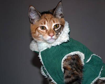 Photograph - Cat In Patrick's Coat by Tikvah's Hope
