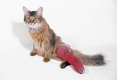 Pet Care Photograph - Cat In Plaster Cast by John Daniels
