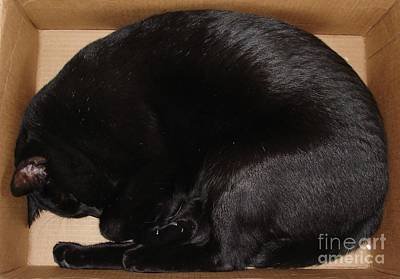 Photograph - Cat In The Box by Kerri Mortenson