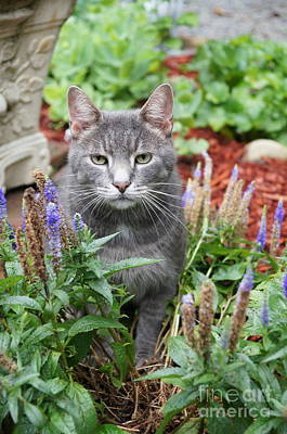 Pet Photograph - Cat In The Garden by Megan Cohen