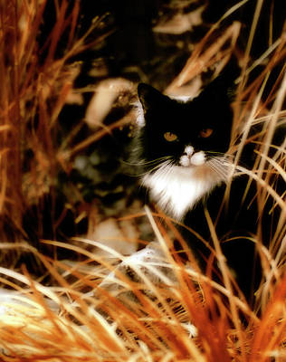 Golden Eye Cat Photograph - Cat In The Golden Grass by Gothicrow Images
