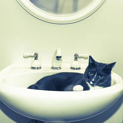 Digital Art - Cat In The Sink by Susan Stone