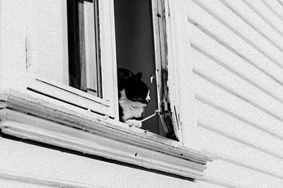 Photograph - Cat In The Window by Bill Howard