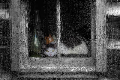 Pour Digital Art - Cat In The Window by Jack Zulli