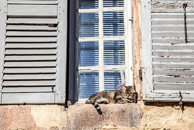 Photograph - Cat In Window by Jennifer Lycke