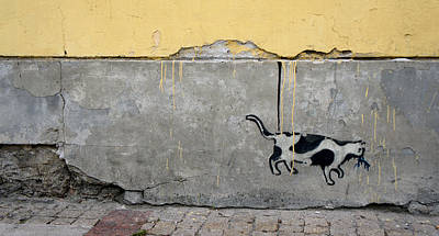 Photograph - Cat by Kees Colijn