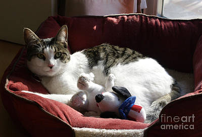 Photograph - Cat Mila With Snoopy by Haleh Mahbod