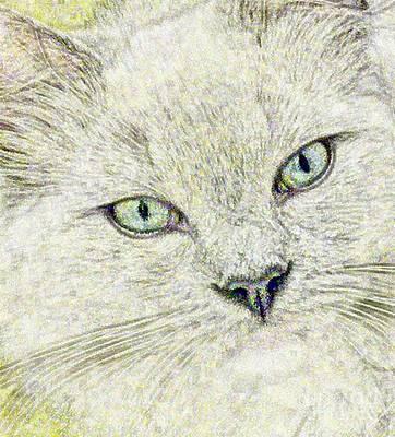 Contemplative Drawing - Cat - Mink Ragdoll - Smokey Blu by Donna E Pickelsimer