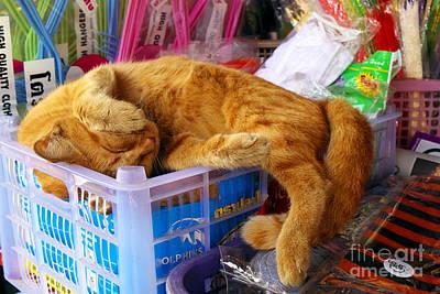 Pussycat Photograph - Cat Nap 2 by Dean Harte