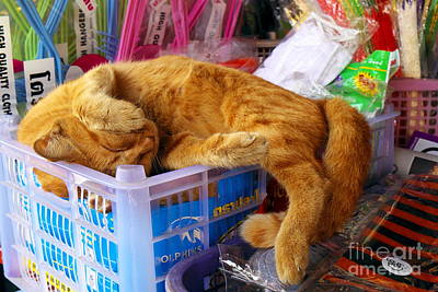 Cat Nap 2 Print by Dean Harte