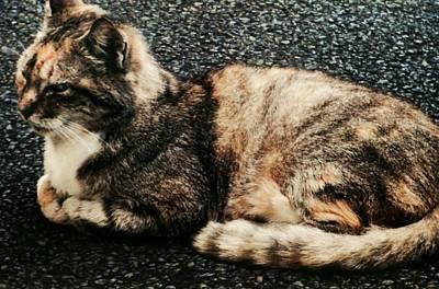 Photograph - Cat Nap by Alohi Fujimoto