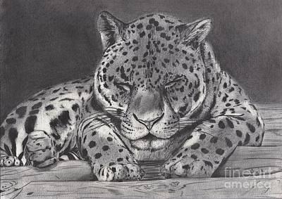 Leopard Drawing - Cat Nap by Celia Fedak