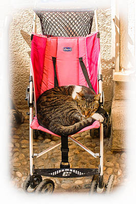 Photograph - Cat Nap by Dany Lison