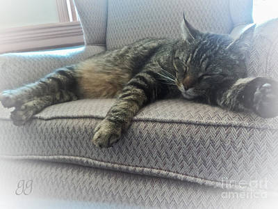 Photograph - Cat Nap by Geri Glavis