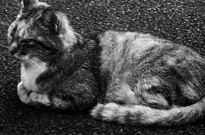 Photograph - Cat Nap II by Alohi Fujimoto