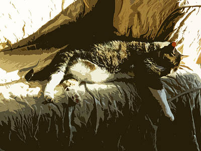 Photograph - Cat Nap by Jacqueline  DiAnne Wasson