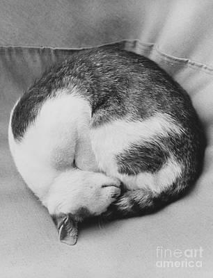 Animal Portraiture Photograph - Cat Nap by Suzanne Szasz