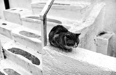 Photograph - Cat Napping Mono by John Rizzuto