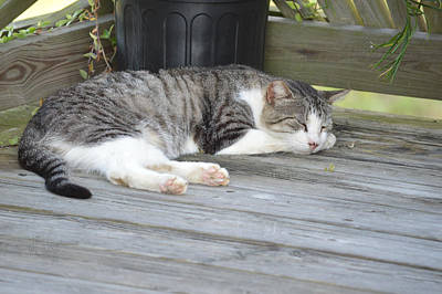 Photograph - Cat Napping by rd Erickson