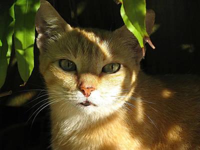 Of Calico Cat Photograph - Cat Of Key West by Melinda Saminski