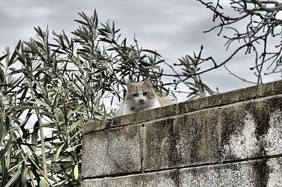 Gray Tabby Photograph - Cat On A Cold Green Wall by Scott Hill