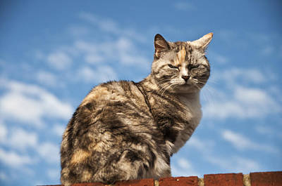 Cat On A Hot Brick Wall Art Print by Steve Purnell