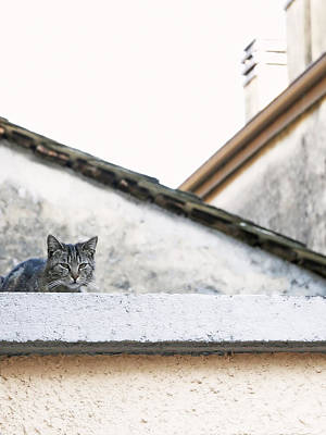 Cat Photograph - Cat On A Roof by Brooke T Ryan