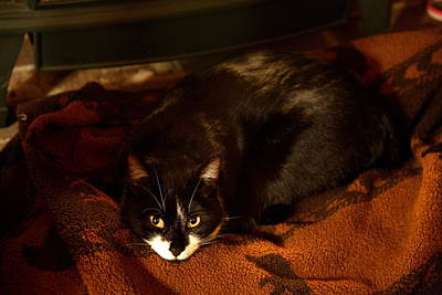 Photograph - Cat On A Rug By Wood Stove by Michael Dougherty
