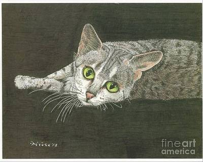 Drawing - Cat On Black by Bill Hubbard