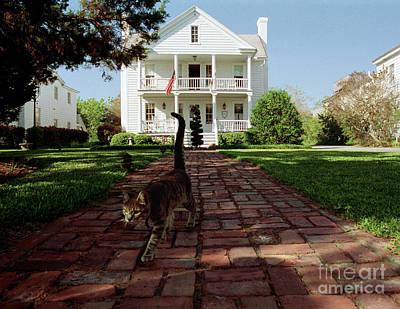 Photograph - Cat On Brick Walk by Tom Brickhouse