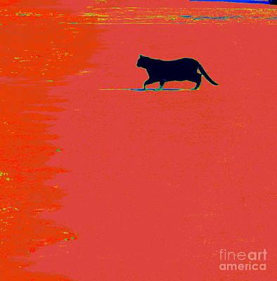Print Cat Photograph - Cat On Lava by Joe Jake Pratt