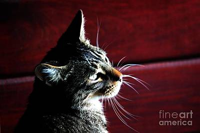 Photograph - Cat On Red by Janice Byer
