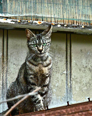 Cat On Roof Art Print by Jocelyn Kahawai