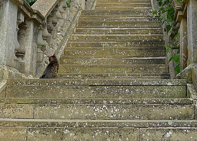 Photograph - Cat On Steps by Denise Mazzocco