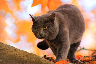 Photograph - Cat On The Prowl by Lorna R Mills DBA  Lorna Rogers Photography