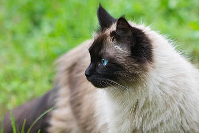 Photograph - Cat Outdoors by Melinda Fawver