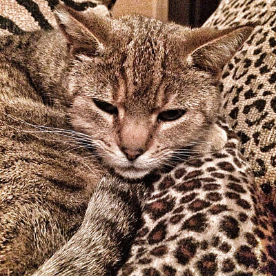 Photograph - Cat Patterns by Patricia Januszkiewicz