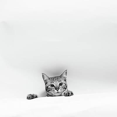 Photograph - Cat Pop Up by Akimasa Harada