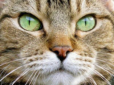 Cat Portrait 1 Art Print