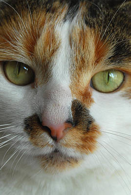 Photograph - Cat Portrait 2 by Caroline Stella