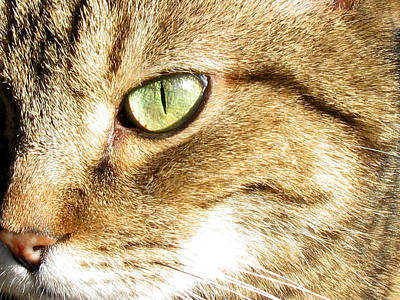 Photograph - Cat Portrait 2 by Helene U Taylor