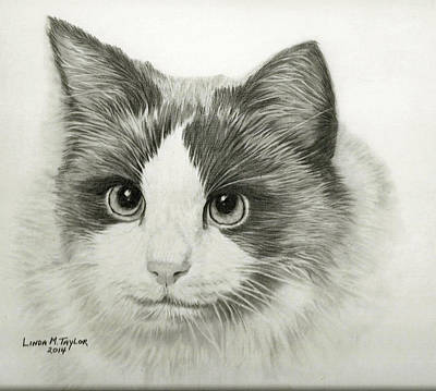 Custom Pet Portrait Drawing - Cat Portrait Custom Graphite Pencil Drawing by Linda Taylor