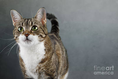 Sweet Photograph - Cat Portrait by Nailia Schwarz